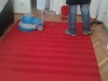 Čistenie a tepovanie kobercov